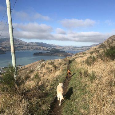 dog-porthills