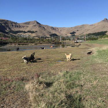 dogs-running